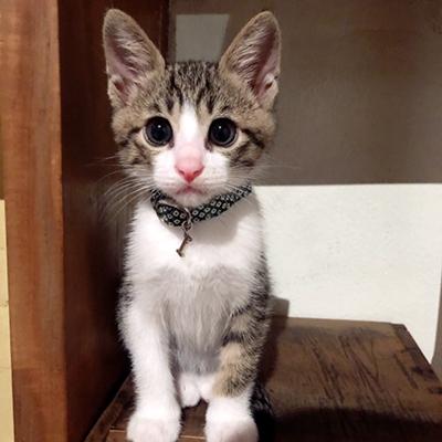 子猫用首輪をした子猫ちゃん
