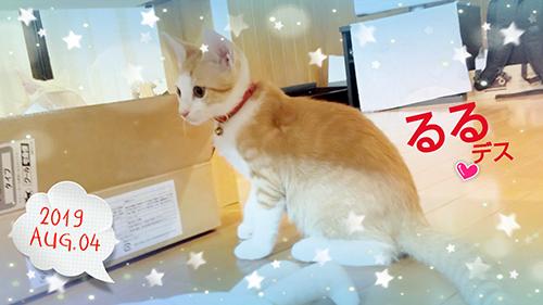 安全な子猫用首輪をした子猫ちゃん