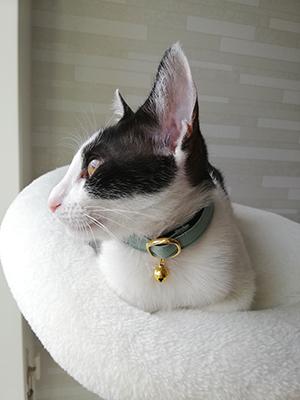 ミントグリーンのセーフティ首輪をした猫