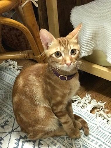 おしゃれな首輪をした猫