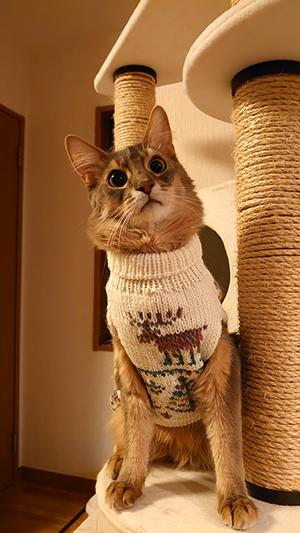猫用セーター