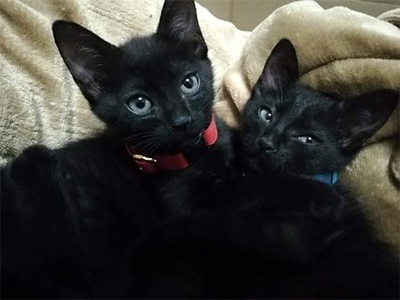 子猫用首輪をした子猫ちゃん2匹