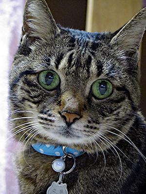 特注サイズの首輪をした猫ちゃん