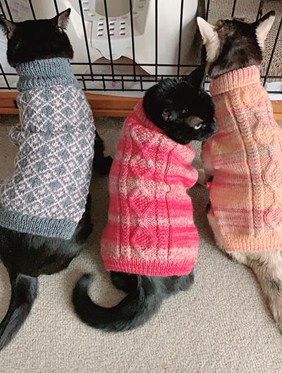 手編みの猫ようセーターを着た3匹の猫