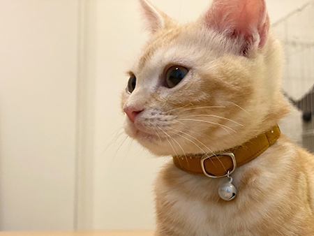 シンプルな茶色の安全首輪をした子猫ちゃん