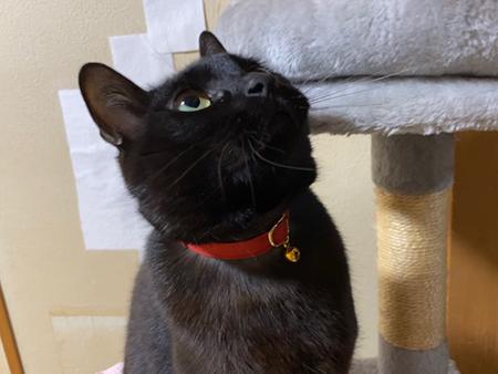 赤い首輪をした猫