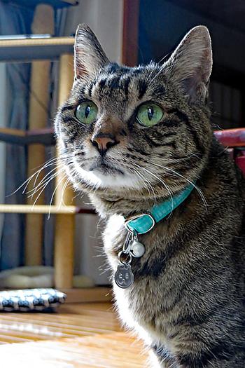 子猫用首輪をした猫