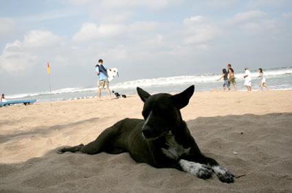 朝のクタビーチと野良犬