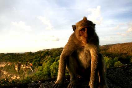 イタズラ猿