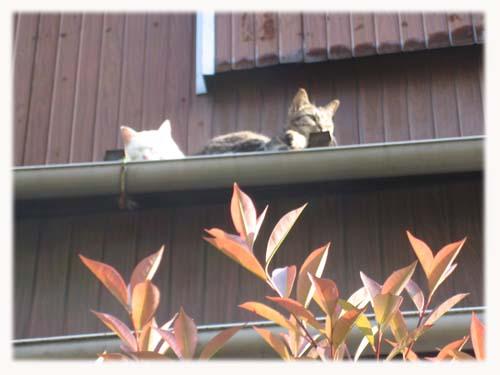 ネコたちの昼下がりのまどろみ