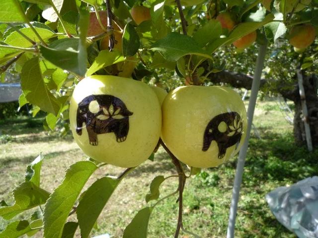 シールを貼ったリンゴ