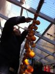 干し柿つるす