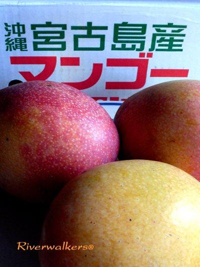 国産マンゴーフルーツ
