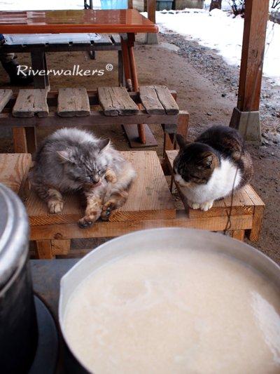 ネコと甘酒