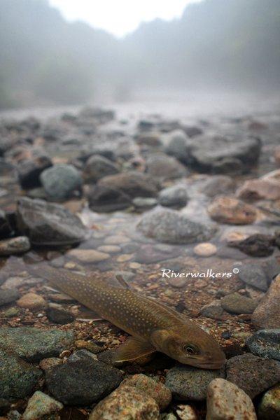 霧にむせぶ渓