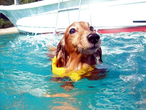 華麗な泳ぎのcooちん♪
