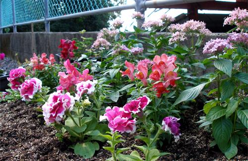 可愛い花壇作りました