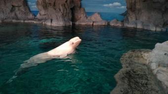 名古屋港水族館3