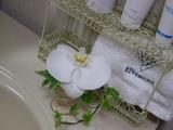 胡蝶蘭洗面所