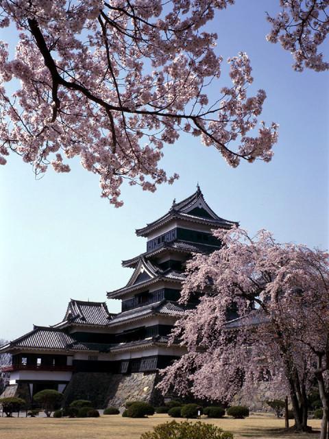 信州桜 松本城