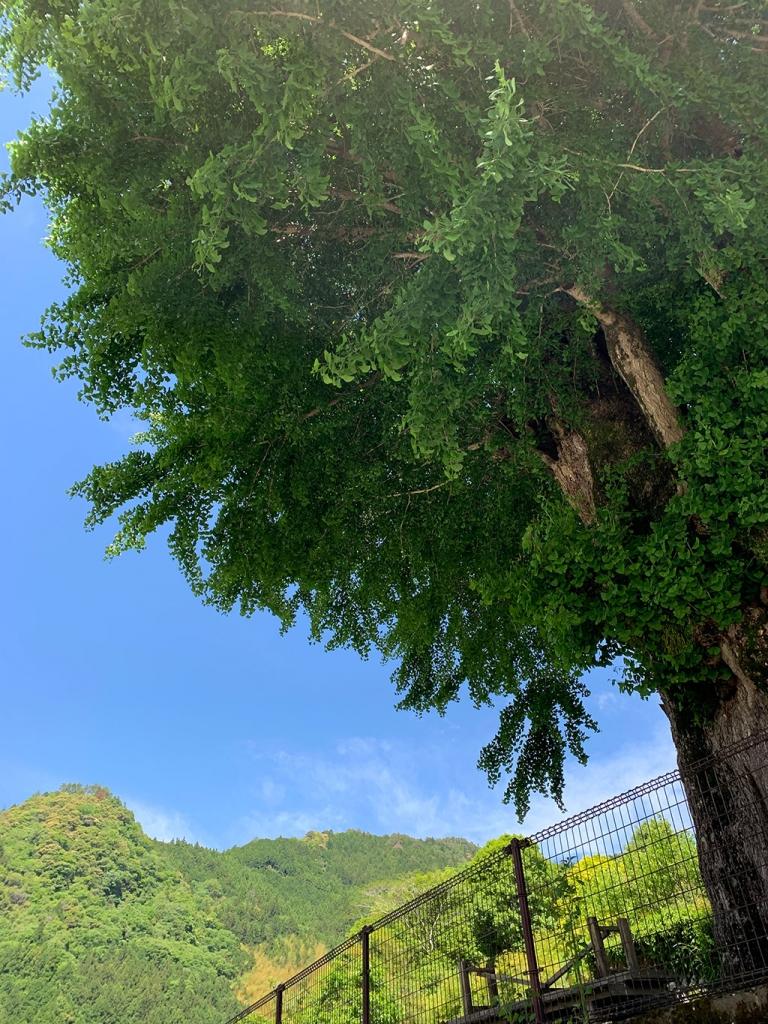 高知のドコモショップ CSR活動 アットホーム 楽しい 求人 ドコモ光 仁淀川町 長者地区 2019年 令和元年