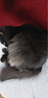 くろちゃん 猫