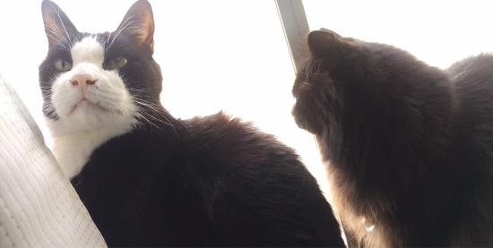 ノア くろちゃん 黒猫 moco