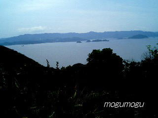 蜜柑山から見た風景