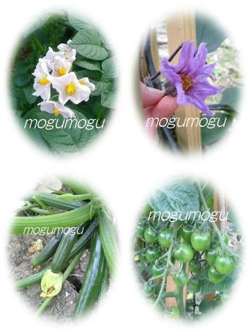 畑の花と実