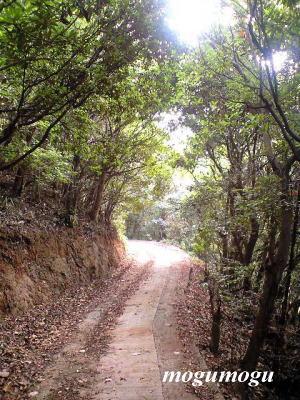 密柑山の道