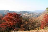 紅葉「国見ヶ丘」