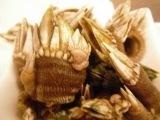 亀の手.JPG