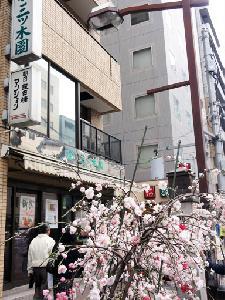 枝垂れ桃5