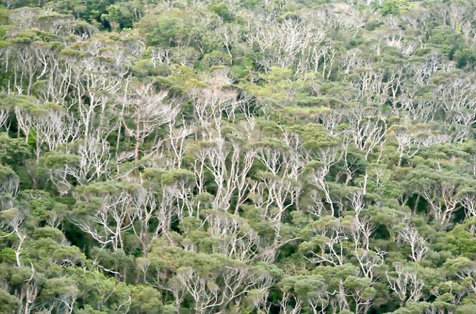 ヤンバルの森