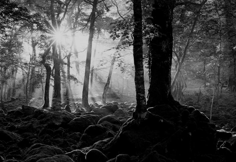 目覚めの森