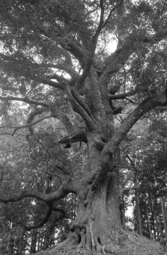 東平寺の森