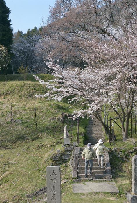 仏隆寺の桜