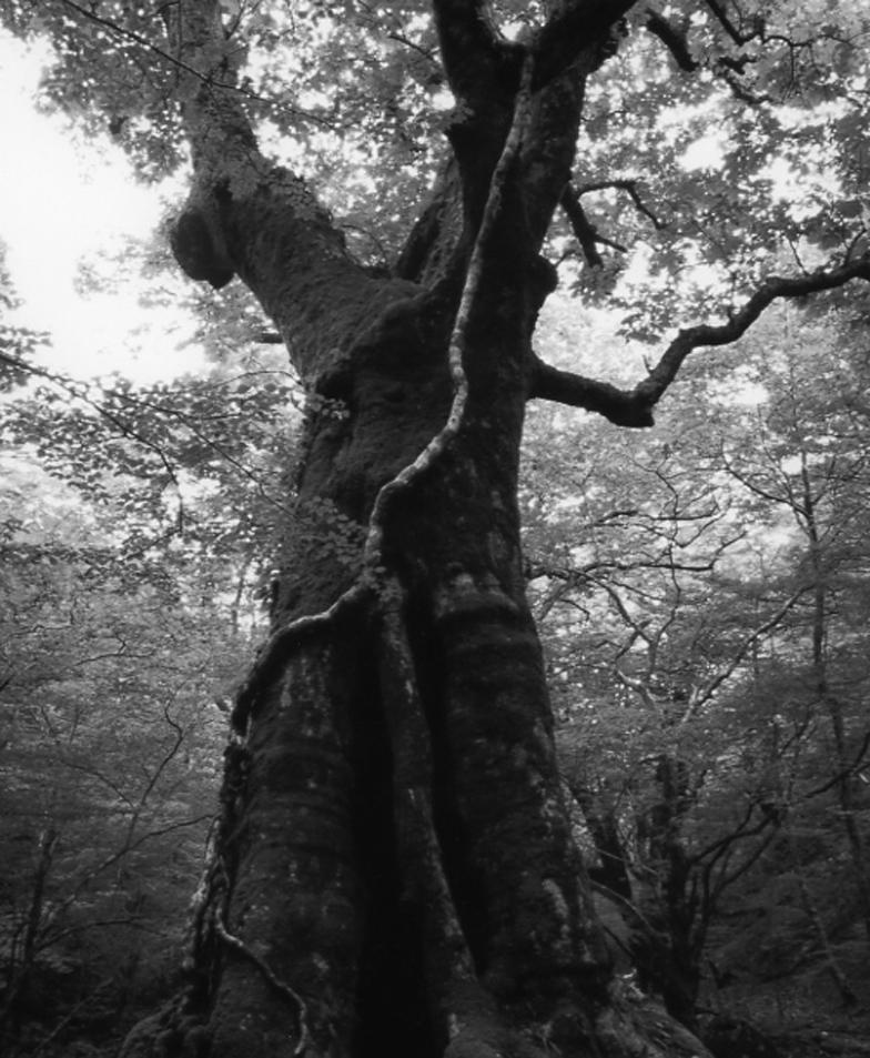 神になった樹