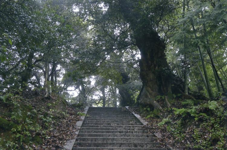 生王部神社のシイノキ