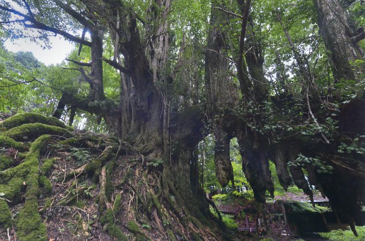 常瀧寺の銀杏