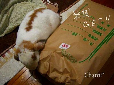 ちゃみと米袋w