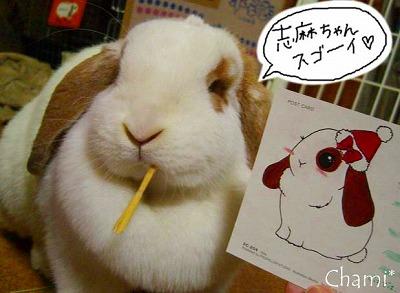 志麻ちゃんのちゃみイラスト!