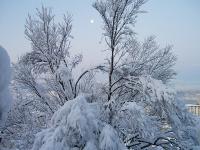 ベランダ正面の桜の木です
