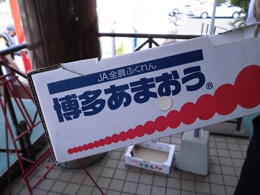CIMG1133.JPG
