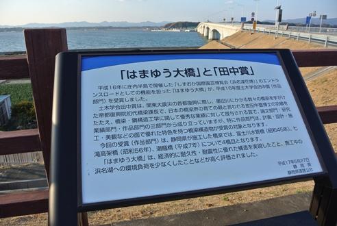 はまゆう (3).JPG