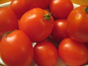 福井産イタリア品種のトマト