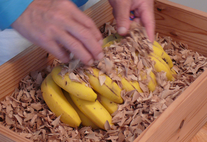 バナナ熟成