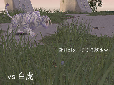 大暴れの白虎さん