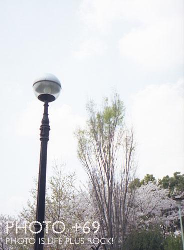 西郷山公園内
