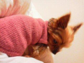 毛糸ピエロ ファインメリノ 犬のセーター